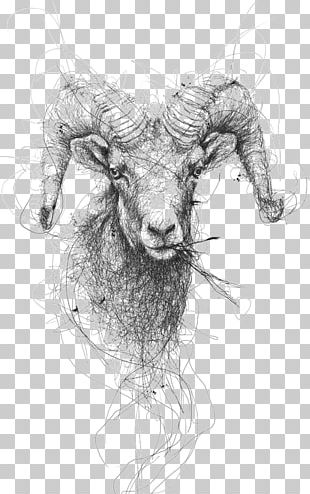 Drawing Sheep Pencil Illustration PNG