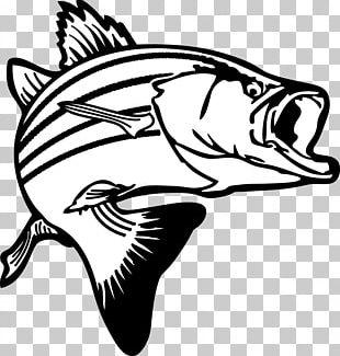 Largemouth Bass Bass Fishing PNG