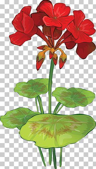 Wild Geranium Drawing Watercolor Painting PNG