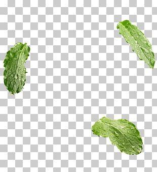 Leaf Vegetable Herb PNG