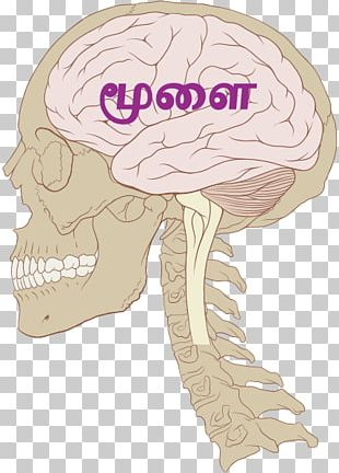 Human Brain Blue Brain Project Traumatic Brain Injury Central Nervous System PNG