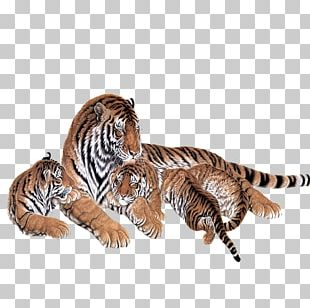 Siberian Tiger Painting Two Tigers PNG