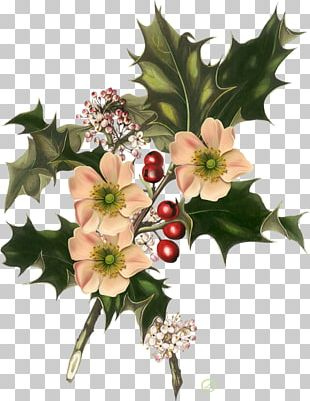 Wild Flowers Christmas Common Holly American Holly PNG
