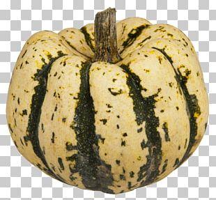 Cucurbita Maxima Zucchini Delicata Squash Winter Squash Pumpkin PNG
