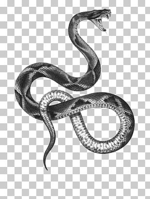 The Snakes Of Australia Tattoo Artist Black-and-gray PNG