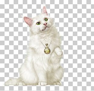 Kitten Whiskers Turkish Van Turkish Angora Asian Semi-longhair PNG