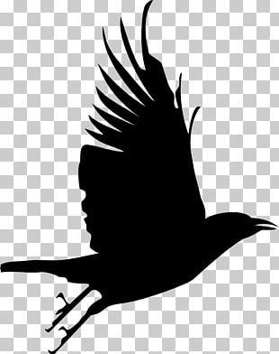 Bird Crow Silhouette PNG