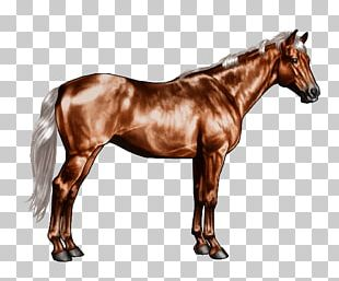 Horse Markings Roan White Chestnut PNG