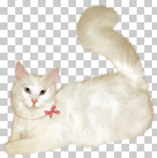 Burmilla Balinese Cat Turkish Van Aegean Cat Turkish Angora PNG