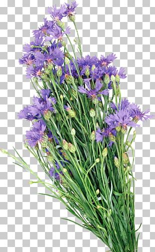 Oil Painting English Lavender PNG