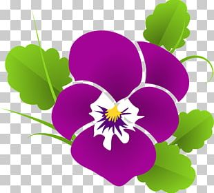 Violet Pansy PNG