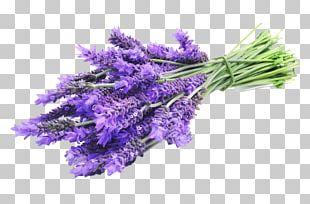 English Lavender Lavandula Latifolia Lavender Oil Herbal Distillate Essential Oil PNG