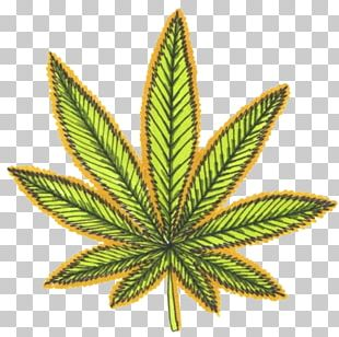 Medical Cannabis Legality Of Cannabis Cannabis Sativa Legalization PNG