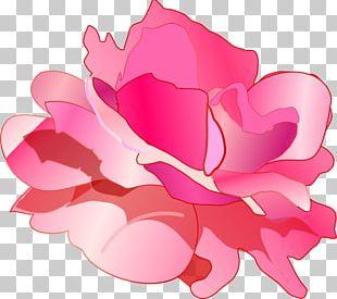 Rose Pink Drawing PNG