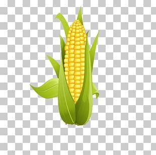 Corn On The Cob Sweet Corn PNG
