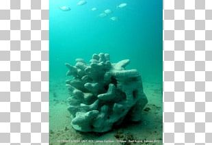Coral Reef Stony Corals 3D Printing PNG