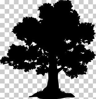 Oak Tree Chestnut Acorn PNG