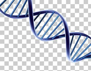 DNA Portable Network Graphics Nucleic Acid Double Helix PNG