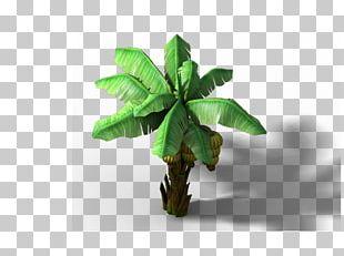 Musa Basjoo Banana PNG