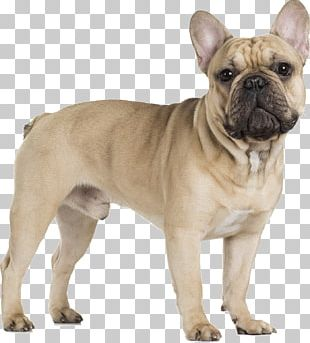 French Bulldog Cavalier King Charles Spaniel Pug PNG