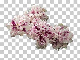 Cut Flowers Cherry Blossom Pink M ST.AU.150 MIN.V.UNC.NR AD PNG