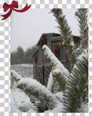 Fir Christmas Ornament Spruce Pine Snow PNG