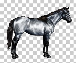 American Paint Horse American Quarter Horse Roan Horse Markings Black PNG