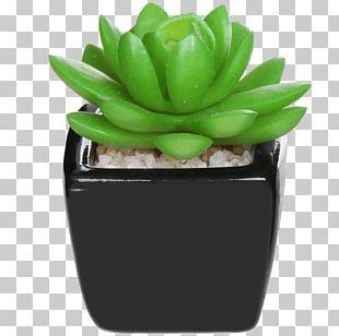 Succulent Plant Artificial Flower Flowerpot Furniture PNG