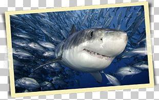 Great White Shark Shark Cage Diving Megalodon Poster PNG