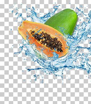 Papaya Water Icon PNG