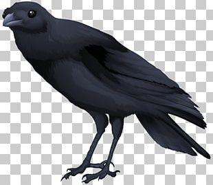 Common Blackbird PNG