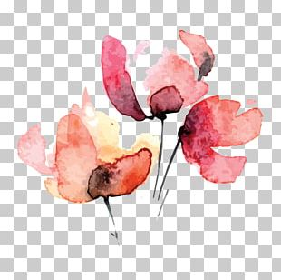 Petal Watercolor Painting Cut Flowers Rose Family PNG
