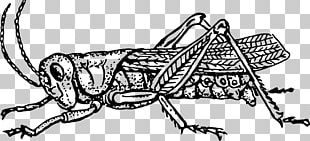 The Ant And The Grasshopper Insect Black And White PNG