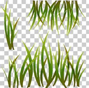 Grasses Polycount Furnace Leaf Plant Stem PNG