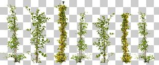Vine Plant Ivy Tree Garden PNG