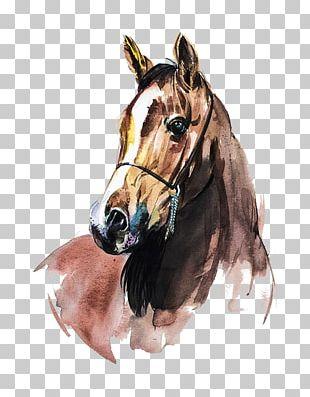 Arabian Horse Watercolor Painting Art PNG