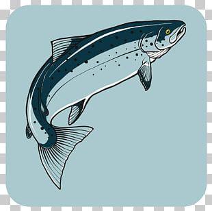 Tofino Fishing Adventures Freedom Cove Cetacea PNG