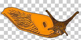 Illustration Gastropods Fauna Carnivores PNG