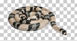 Honduran Milk Snake Reptile Sinaloan Milk Snake Stock Photography PNG