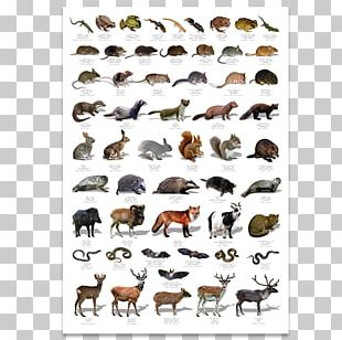 Wildlife Poster United Kingdom Bird PNG