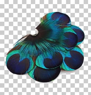 Feather Peafowl Designer PNG