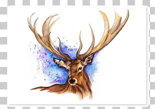 Elk Reindeer Antler Watercolor Painting PNG