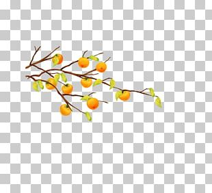 Cartoon Fruit Tree Tangerine PNG
