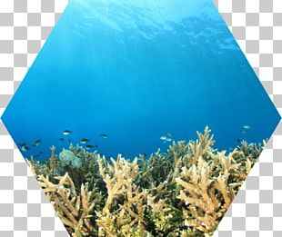 Coral Reef Fish Water Ecosystem PNG
