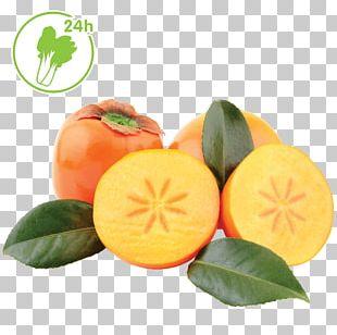 Clementine Tangerine Mandarin Orange Tangelo Bitter Orange PNG
