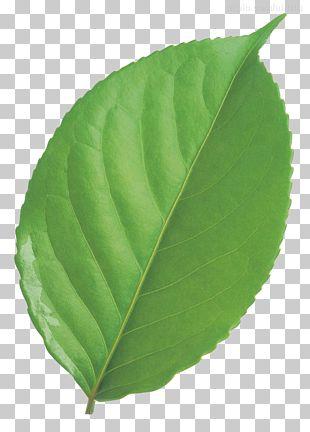Leaf Circle Green PNG