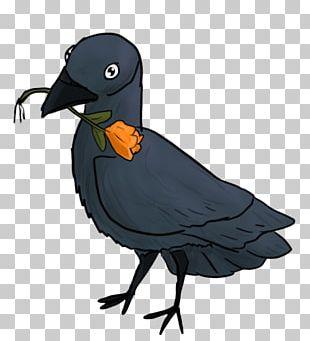 Water Bird Beak Feather Animal PNG