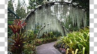 Botanical Garden Water Feature Walkway Tree PNG