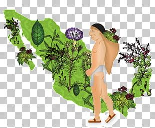 Ixu Medicina Natural Traditional Medicine Knowledge Science PNG