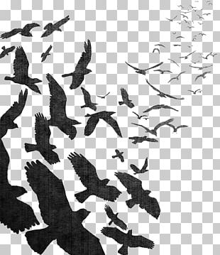 Bird Flight Bird Flight Common Raven Flock PNG
